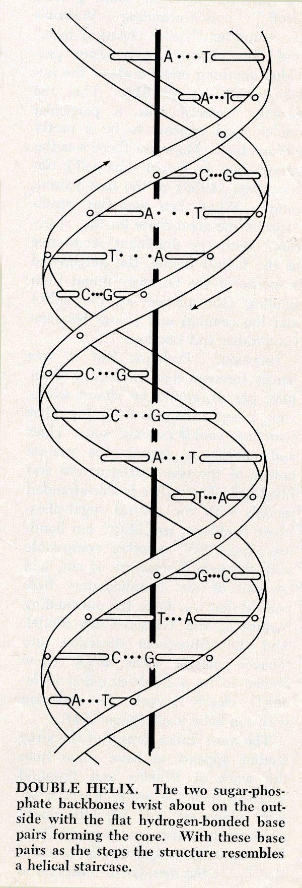 bio6.009.79-diagram-600w